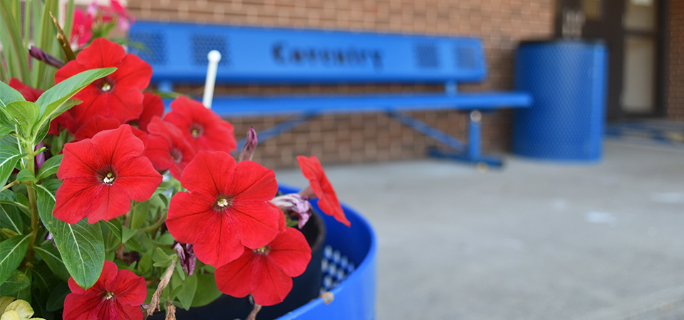 Flowers and Bench at Coventry Elementary